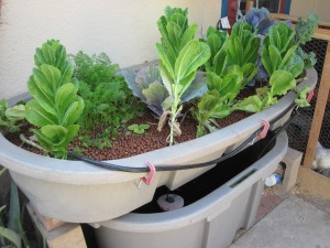 Our first system, built from food grade stock troughs